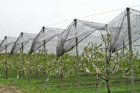 Métodos antipajaros arboles frutales