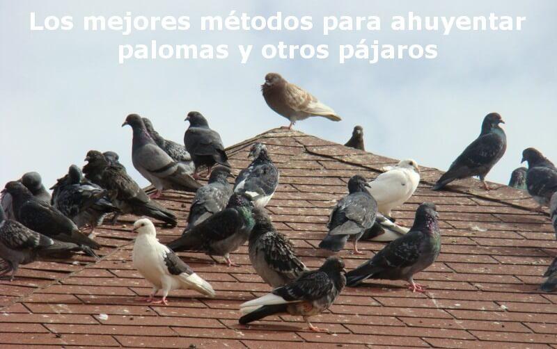 Los mejores m todos para ahuyentar palomas y otros p jaros - Como alejar las ratas de la casa ...